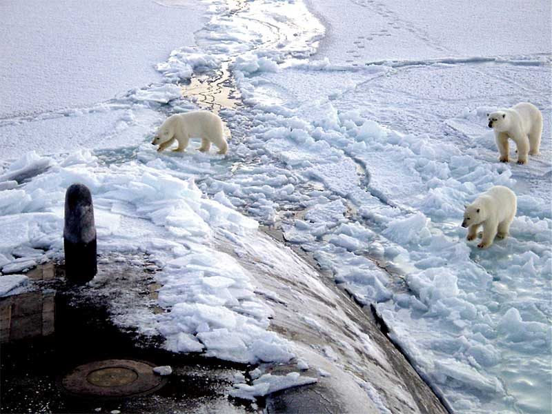 Polar_bears_near_north_pole